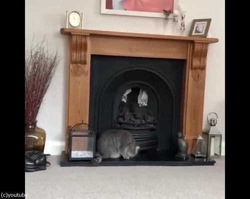 猫、暖炉に上ろうとするも失敗05