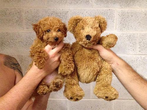 何かに似てる犬たち02