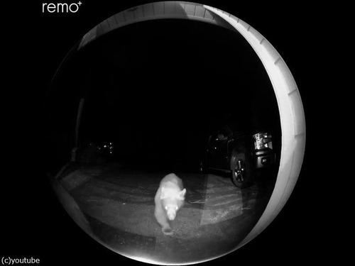 夜中にピンポン…クマだった!01