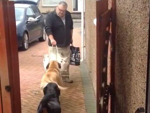 荷物を運ぶ犬01