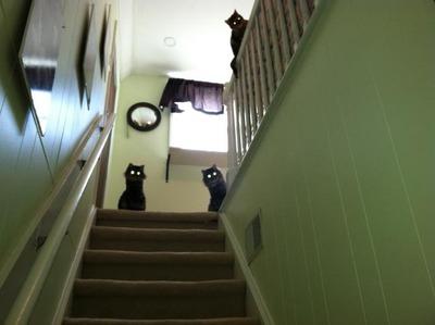 2階の猫01