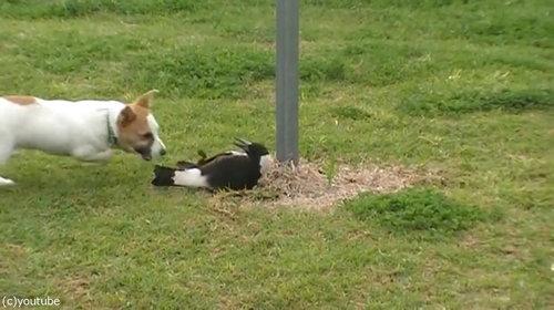 鳥と犬は親友になりうる06