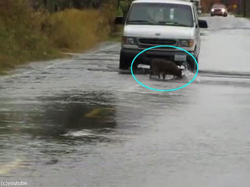 道路で犬が魚釣り00