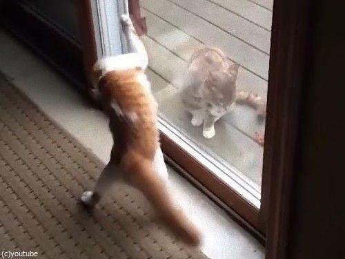 ハイテンションの猫と冷静な猫04