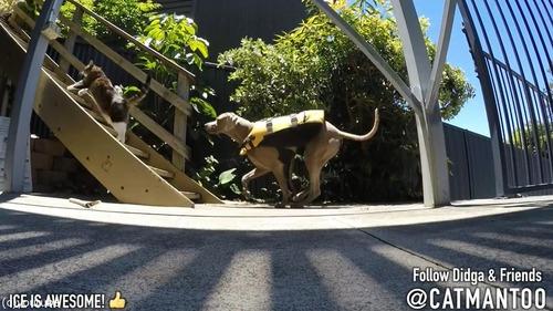 犬の背中に乗ってプール遊びをする猫09