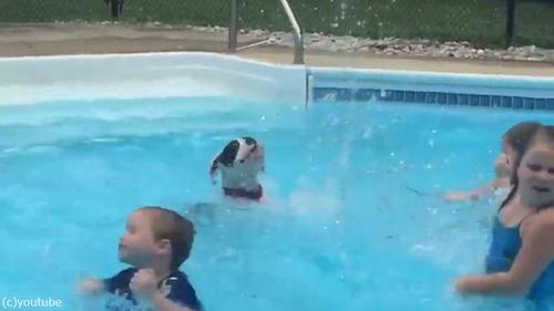 子どもたちから水遊びを教わるワンちゃん04