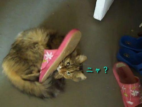 リーゼント猫