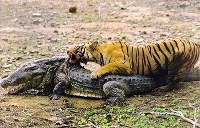 虎vsワニ