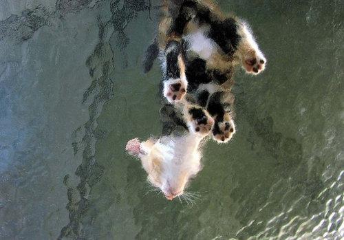 ガラスの上の猫11