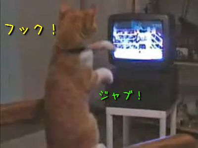 ボクシング猫