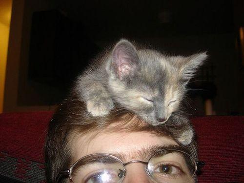 猫を頭乗せ10