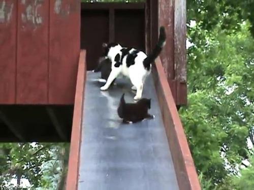 滑り台を落ちる子猫を助ける親猫…まさかのオチ03