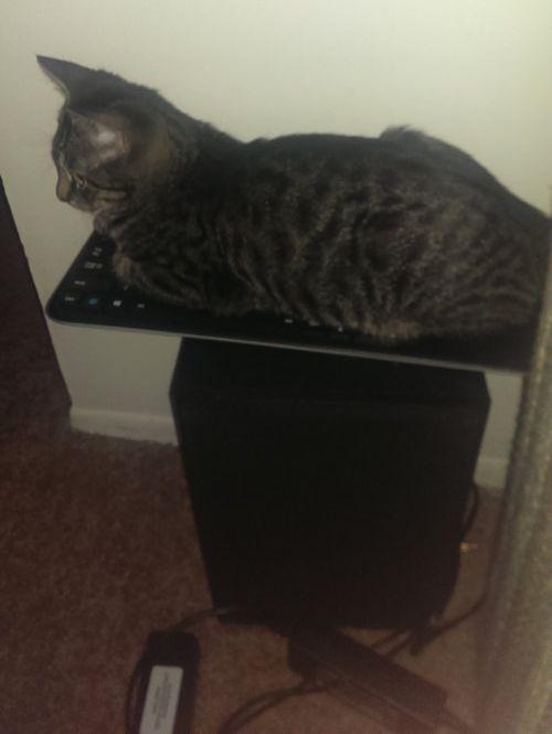 キーボードに座る猫01