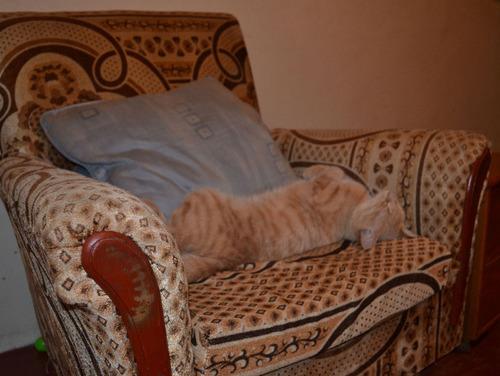 ケニアで子猫07