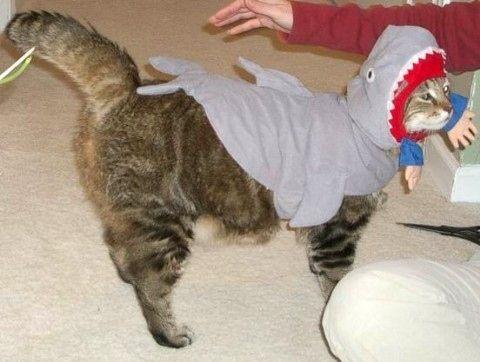 サメ猫05