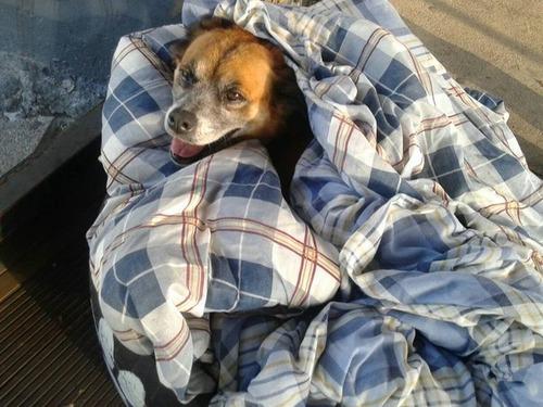 ブラジルのバス停で犬に布団00