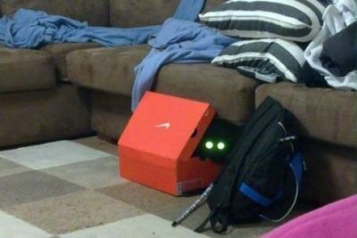 潜む猫12