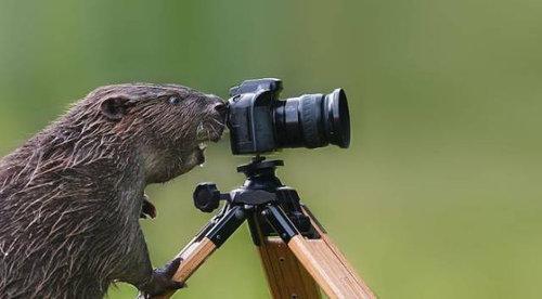 カメラマンな動物08