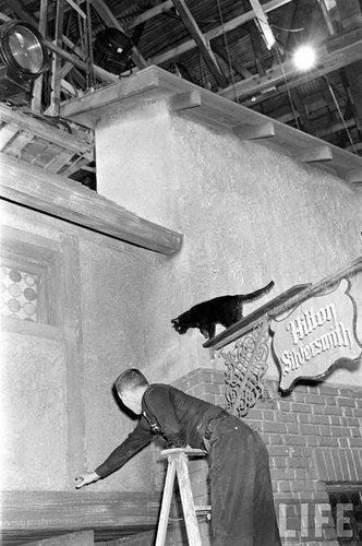 黒猫のオーディション05