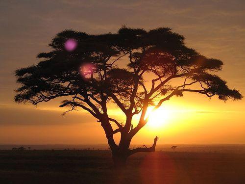 アフリカの森林版、万里の長城00