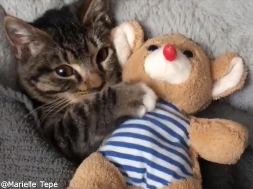 猫のおやすみ動画がかわいすぎ00
