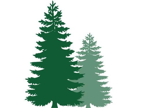 木から木が育つとき