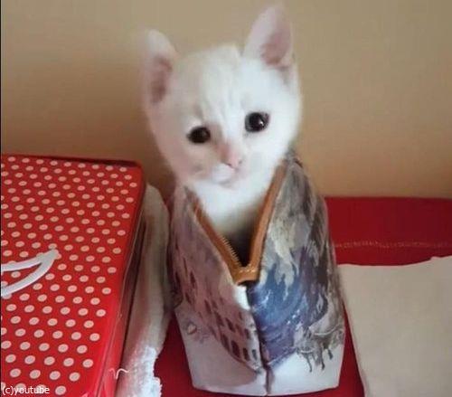 子猫の超高速「いないいないばあ」02