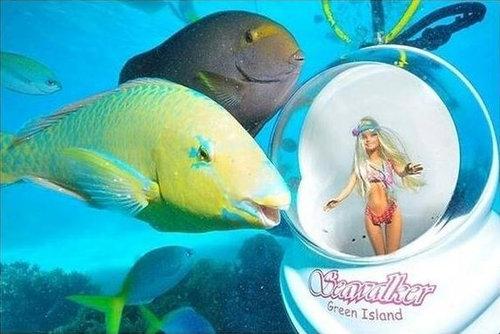 魚「ギャビン」04