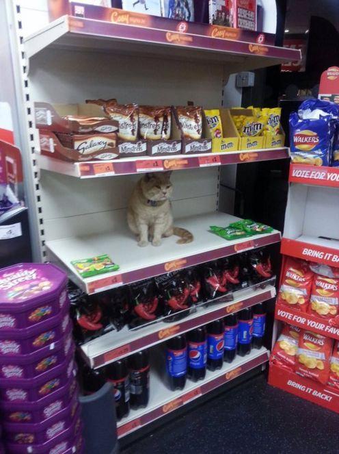 スーパーマーケットに住みついた猫05
