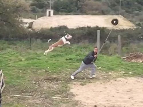 訓練された犬のジャンプ力04