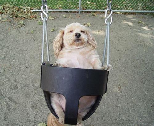 ブランコ犬13