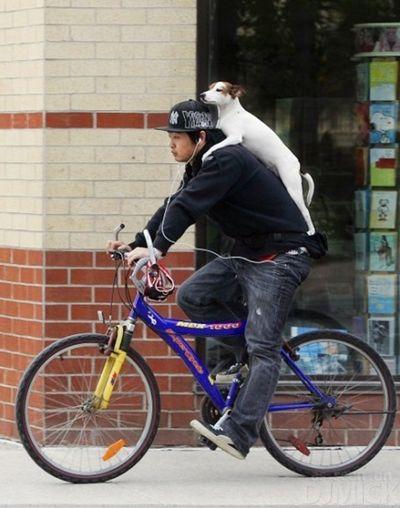 自転車やバイクに乗る犬たち10