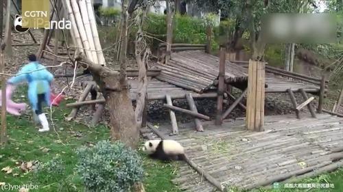 おもちゃを片付けられたパンダはこうなる02
