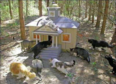 猫の王国08