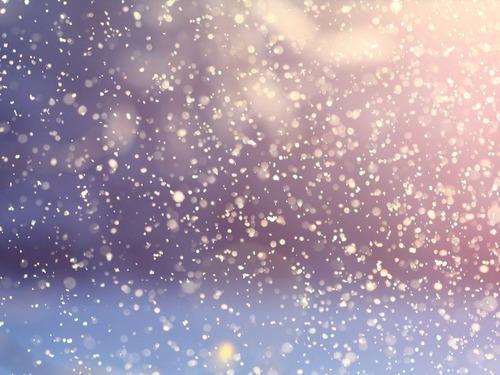 猫が降雪を待っていた場所