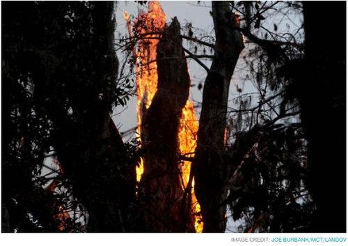 樹齢2000年のオリーブの木05