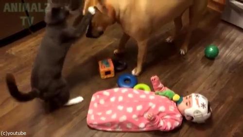 赤ちゃんに蹴られた猫、犬に八つ当たり04