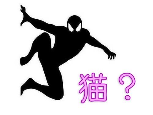 スパイダーマンみたいな猫00