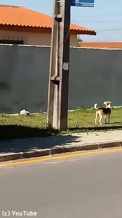 犬が壁越えジャンプにチャレンジ01