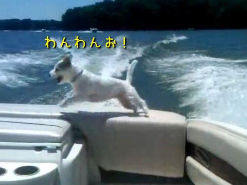 ボートから落ちた犬00