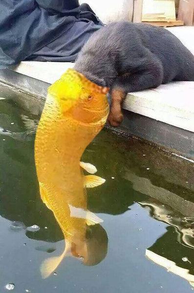 犬と魚の愛情02