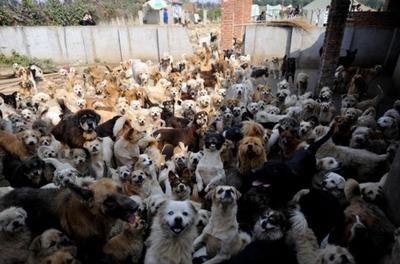 1500匹の犬と200匹の猫07