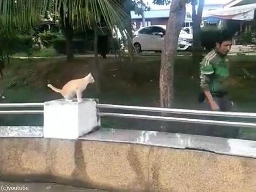 木から降りられない猫06