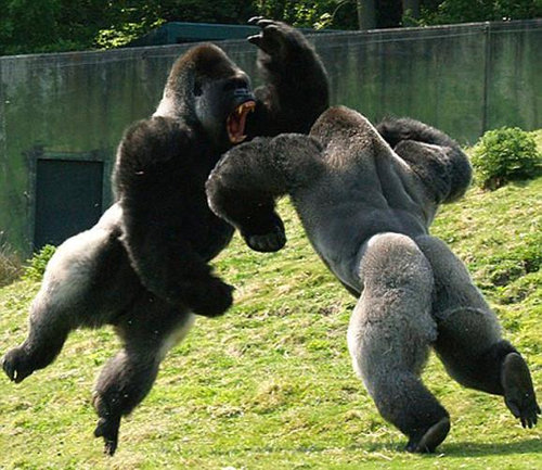 12動物たちの闘い