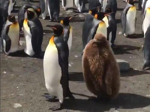 ペンギンの親子03