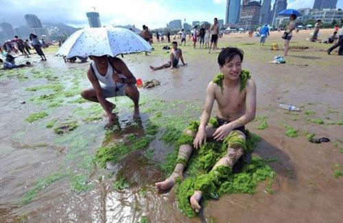 中国の緑の海08