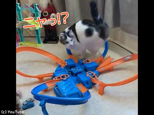 おもちゃに夢中な猫00