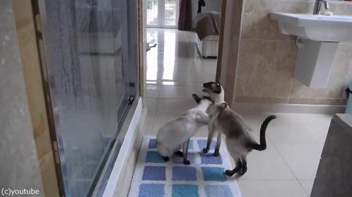 ご主人のシャワータイムに猫は…02