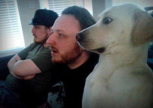 猫好きを犬好きにする写真09