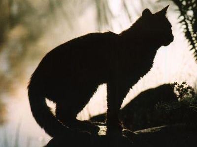 宝石のように美しい左右の瞳の色が違う猫TOP